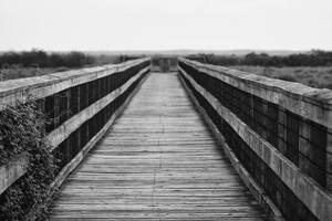 Paynes Prairie Boardwalk